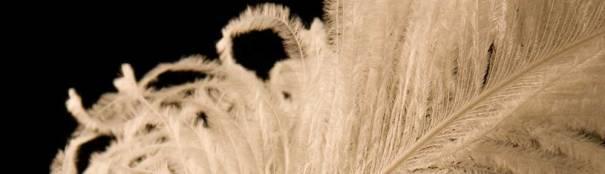 White feather closeup